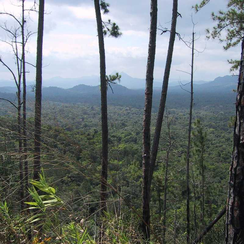 Cockscomb Basin Forest Reserve