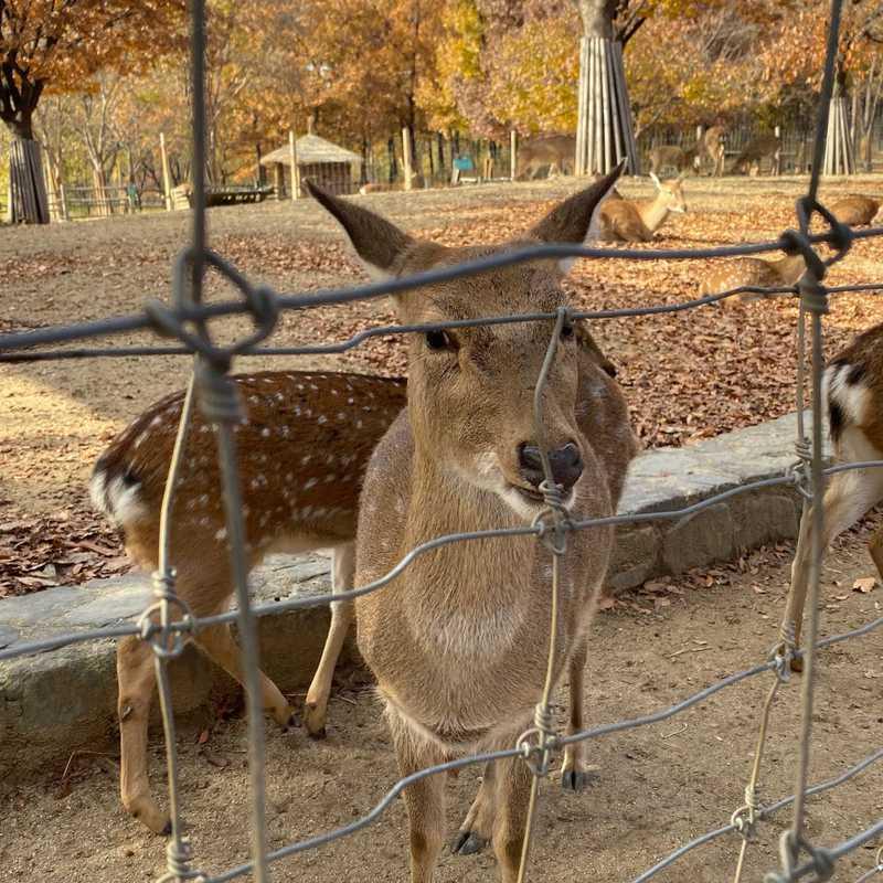 Deer Corral