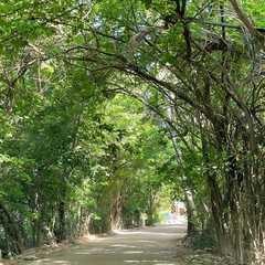 Túnel Verde, Porto de Pedras, Alagoas