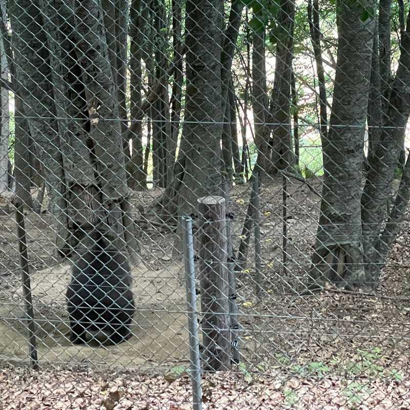 Arcturos Bear Sanctuary