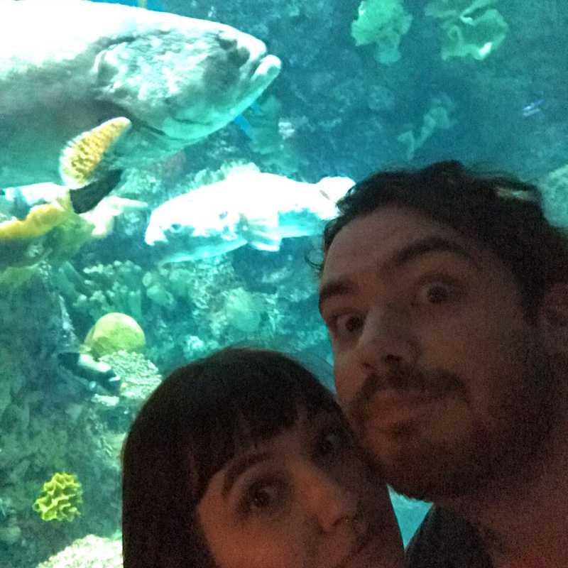 Place / Tourist Attraction: Shedd Aquarium (Chicago, United States)
