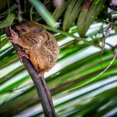 Philippine Tarsier Sanctuary - Photos by Real Travelers, Ratings, and Other Practical Information