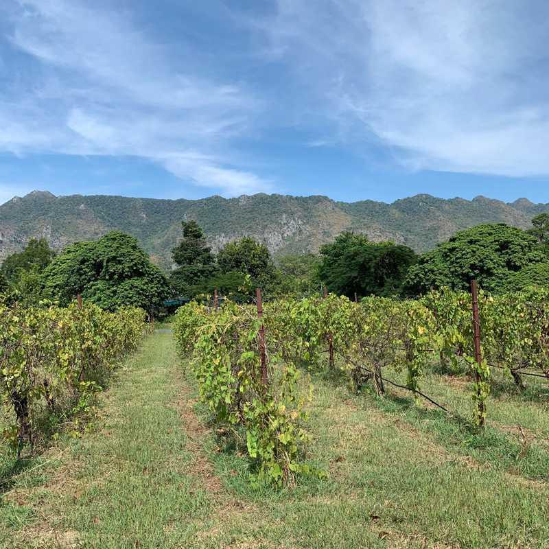 PB Valley Khaoyai Winery