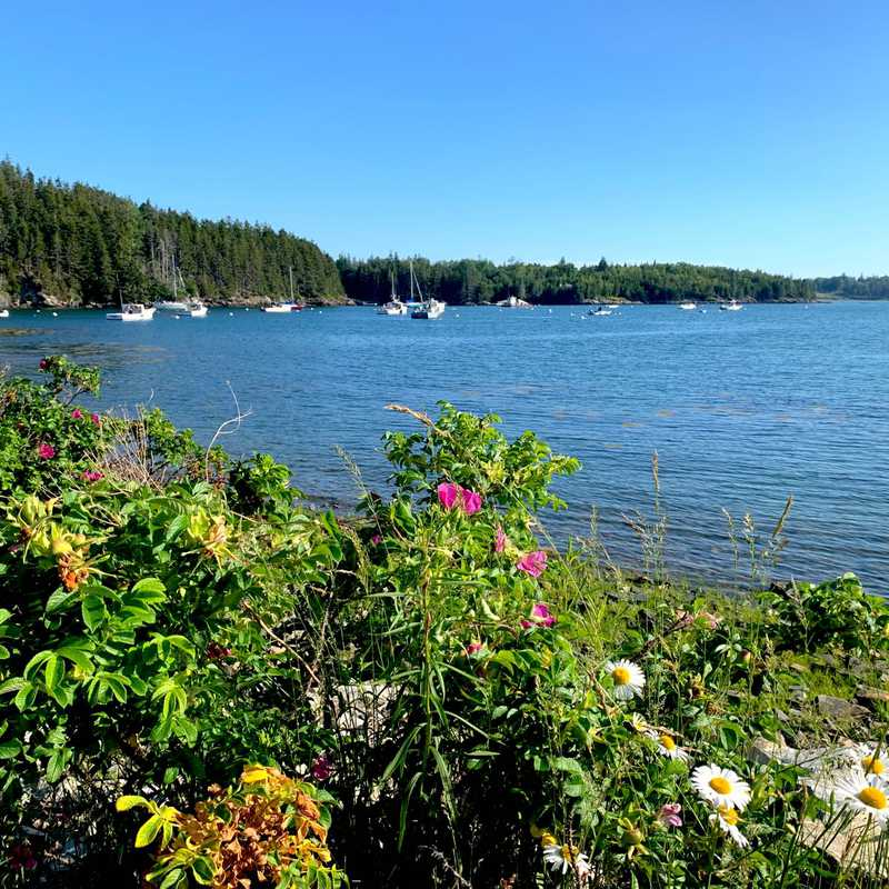Seal Cove Picnic Area