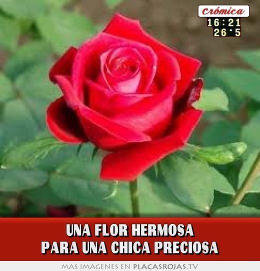 una flor hermosa para una chica preciosa placas rojas tv