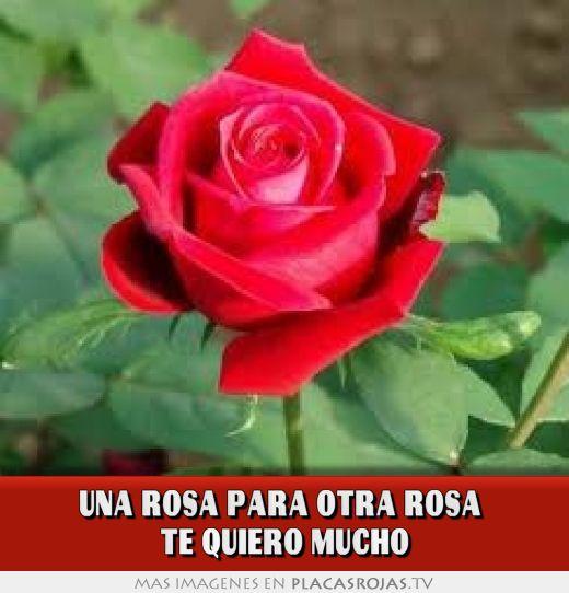Una Rosa Para Otra Rosa Te Quiero Mucho Placas Rojas Tv