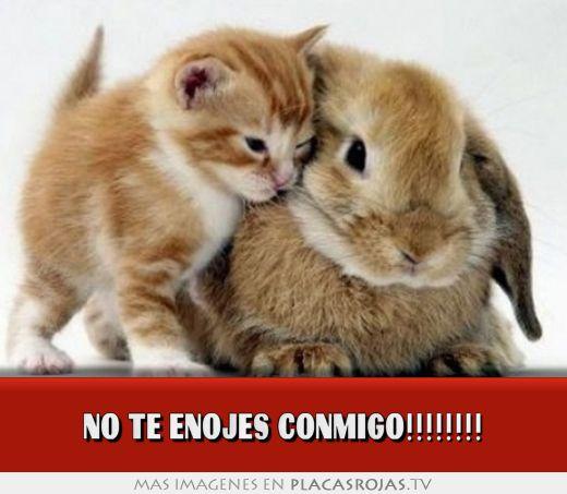 No Te Enojes Conmigo Placas Rojas Tv