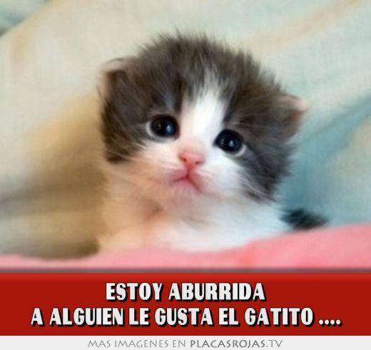 ESTOY ABURRIDA A ALGUIEN LE GUSTA EL GATITO .... - Placas Rojas TV