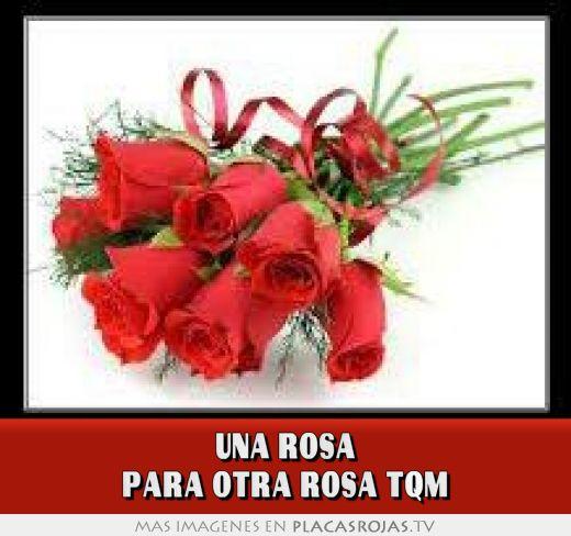 Una Rosa Para Otra Rosa Tqm Placas Rojas Tv