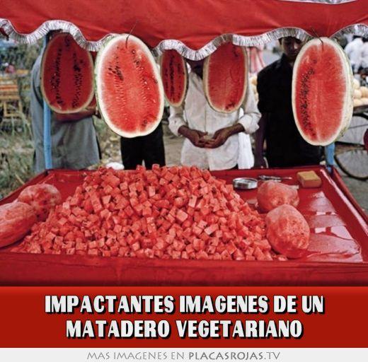 Impactantes imagenes de un matadero vegetariano