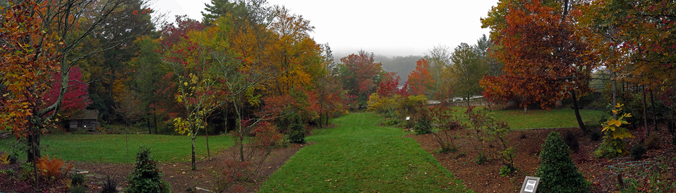 Allee by Daniel Boone Native Gardens | Plants Map