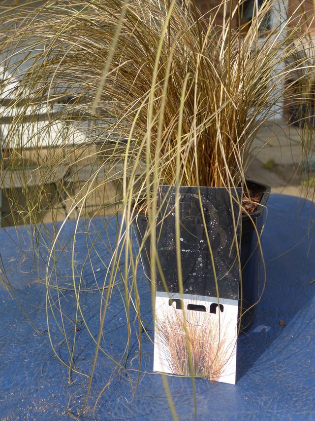 Carex - Bronze Form by SkyGreen in Circular Bed   Plants Map
