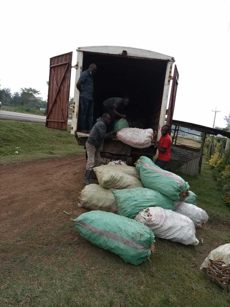 Cuttings distribution in Bungoma