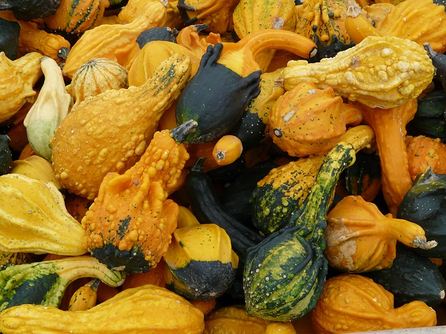 decorative-squashes-61275_640.jpg