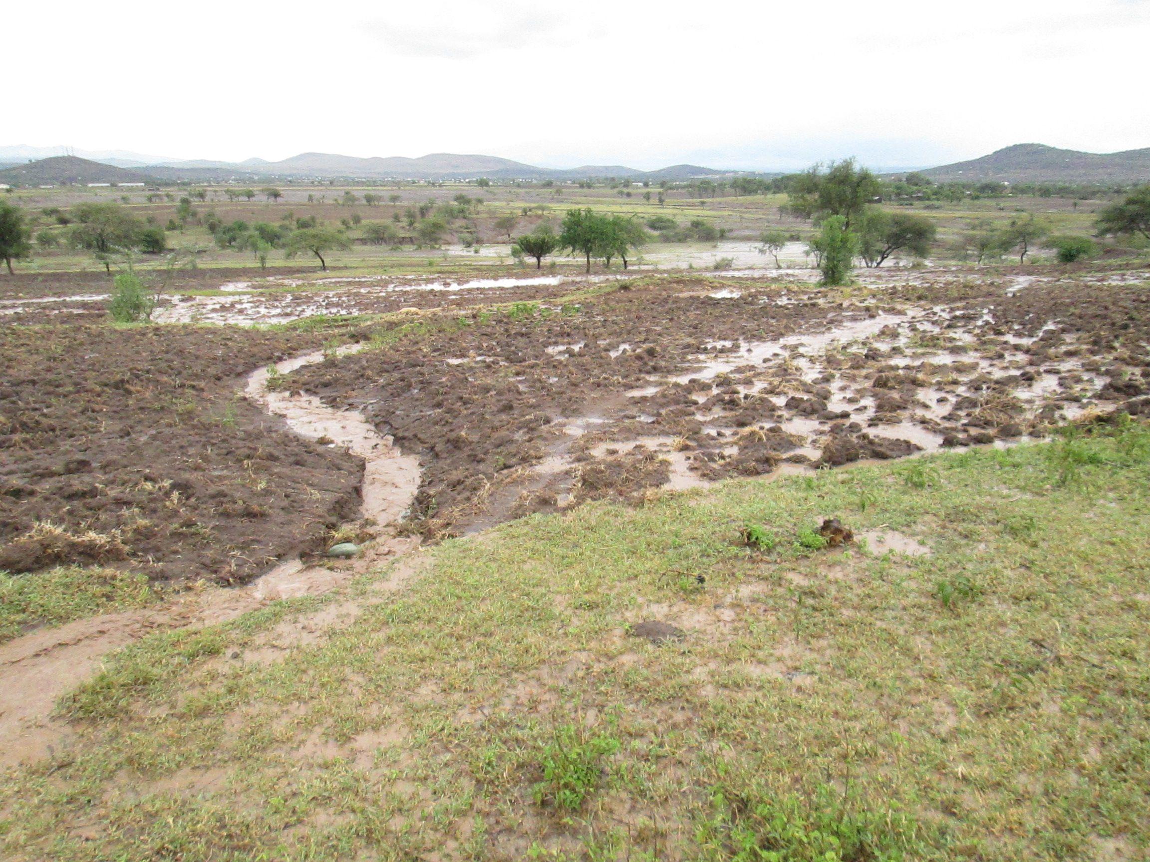 Overland flow following 32 mm of rainfall over ~45 min near Kisongo, Tanzania.