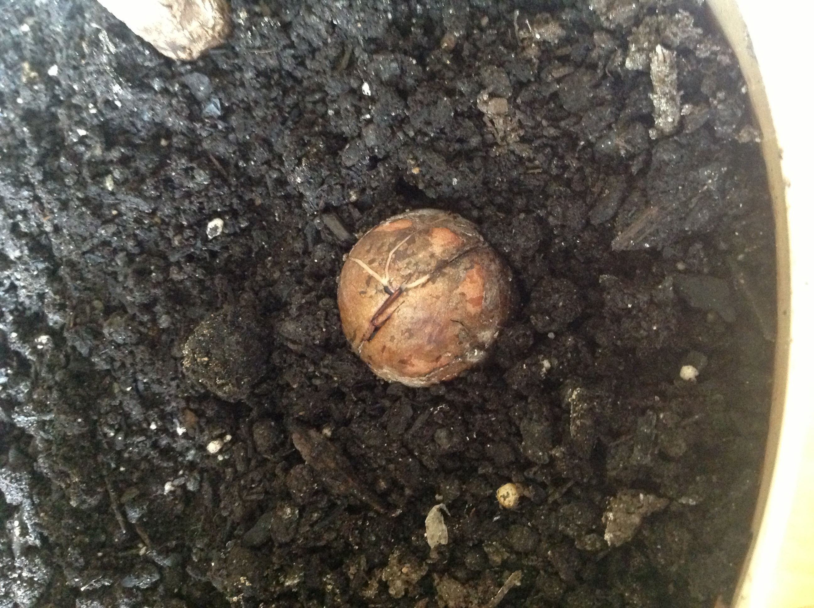 Seed nestled in soil, cracks visible