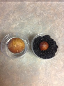 What kind is the seed on the left?