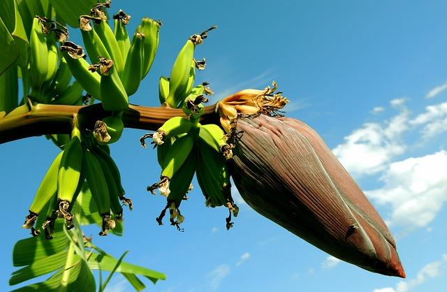 banana-256521_640.jpg