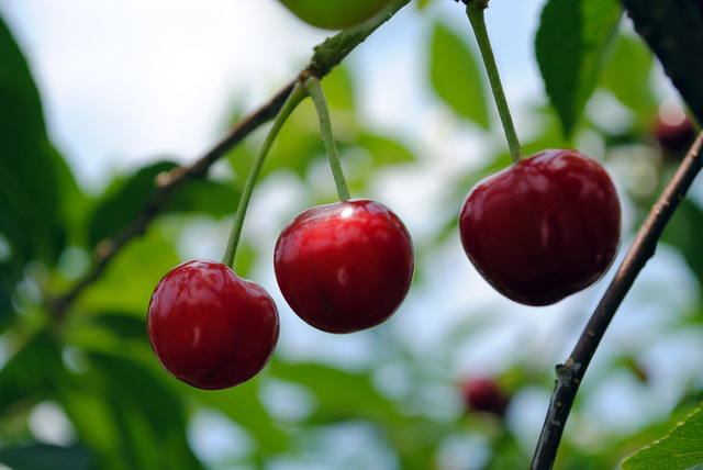 Cherry (including sour)