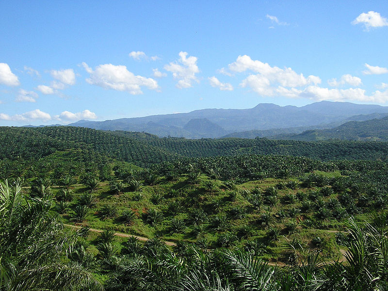 800px-Oil_palm_plantation_in_Cigudeg-03.jpg