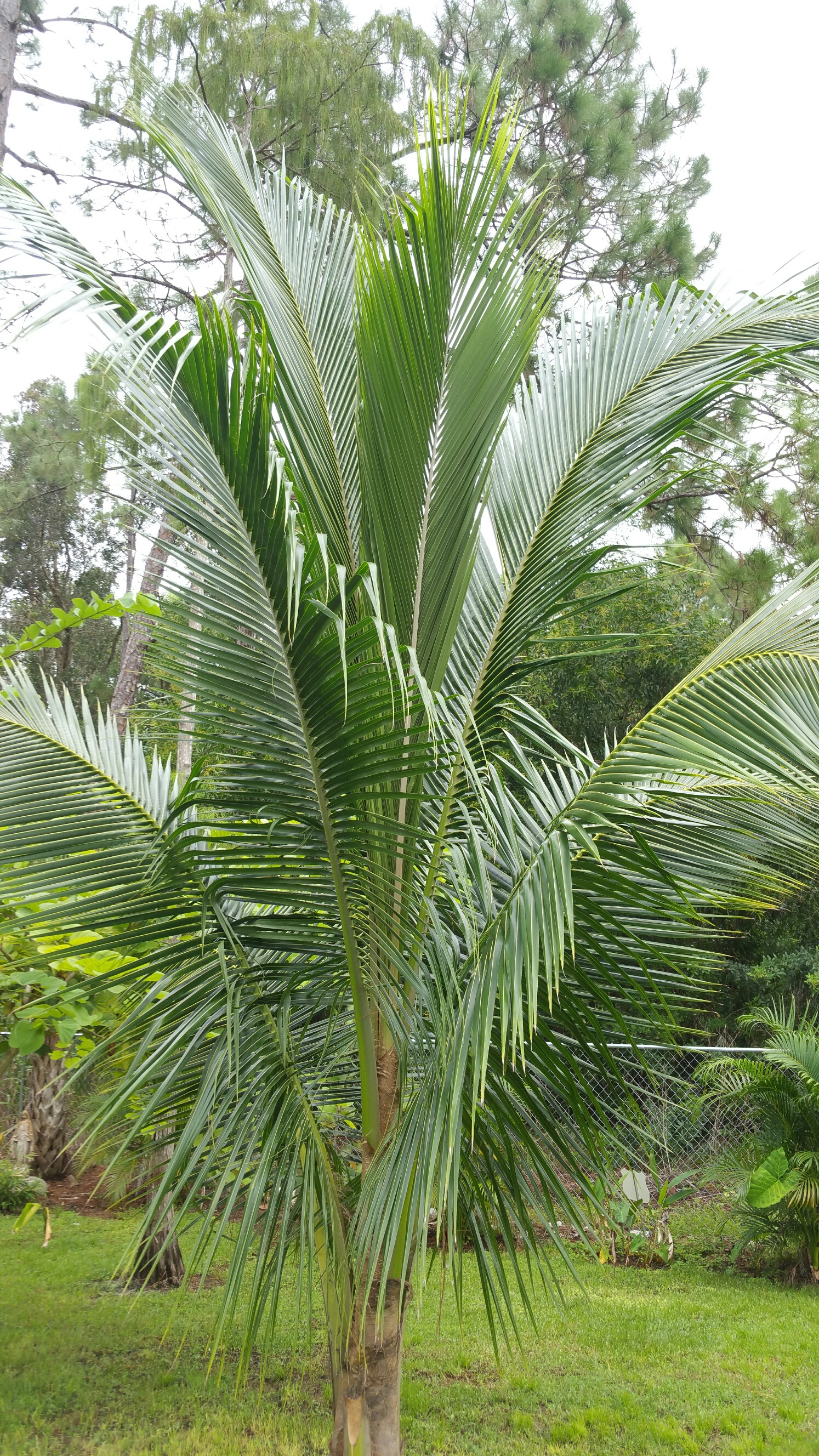 Palm near by looks perfect