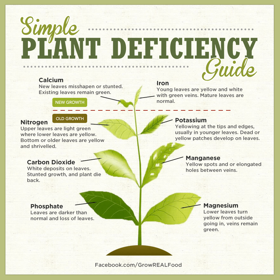 simple-plant-deficiency-guide.png