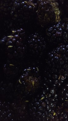 Larvae in blackberries