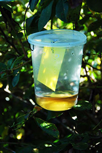 vinegar-trap-200.jpg