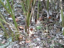 This is a problem I noticed last month in my father's plantation. We are not aware of this. Can I get information about this.
