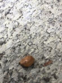 Looks like a slug? I found on my kale plants