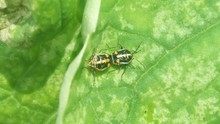 The insect on the plant leaves.
