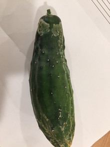 some kind of infection on cucumber at stem end