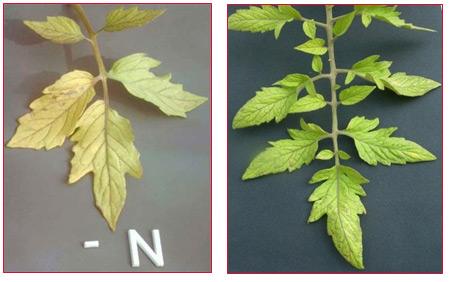 characteristic_nitrogen_03.jpg