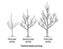 pruning-ctrl-ldr-wisc-500.jpg