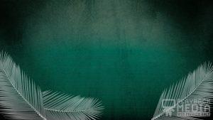 Redemption Palm Motion Background