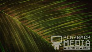 Ancient Palm 1 Still Background