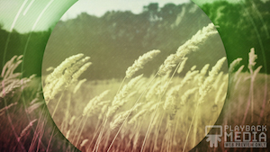 Barley Breeze 1 Motion Background