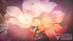 Flowers For Mom 1 Still Background