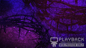 Purple Crown of Thorns Still Background