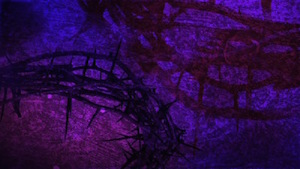 Purple Crown of Thorns Motion Background
