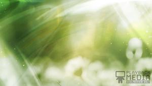 Revealing Nature 1 Motion Background Image