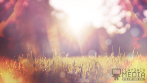 Sunlit Grass 1 Still Background Image