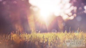 Sunlit Grass 1 Motion Background Image