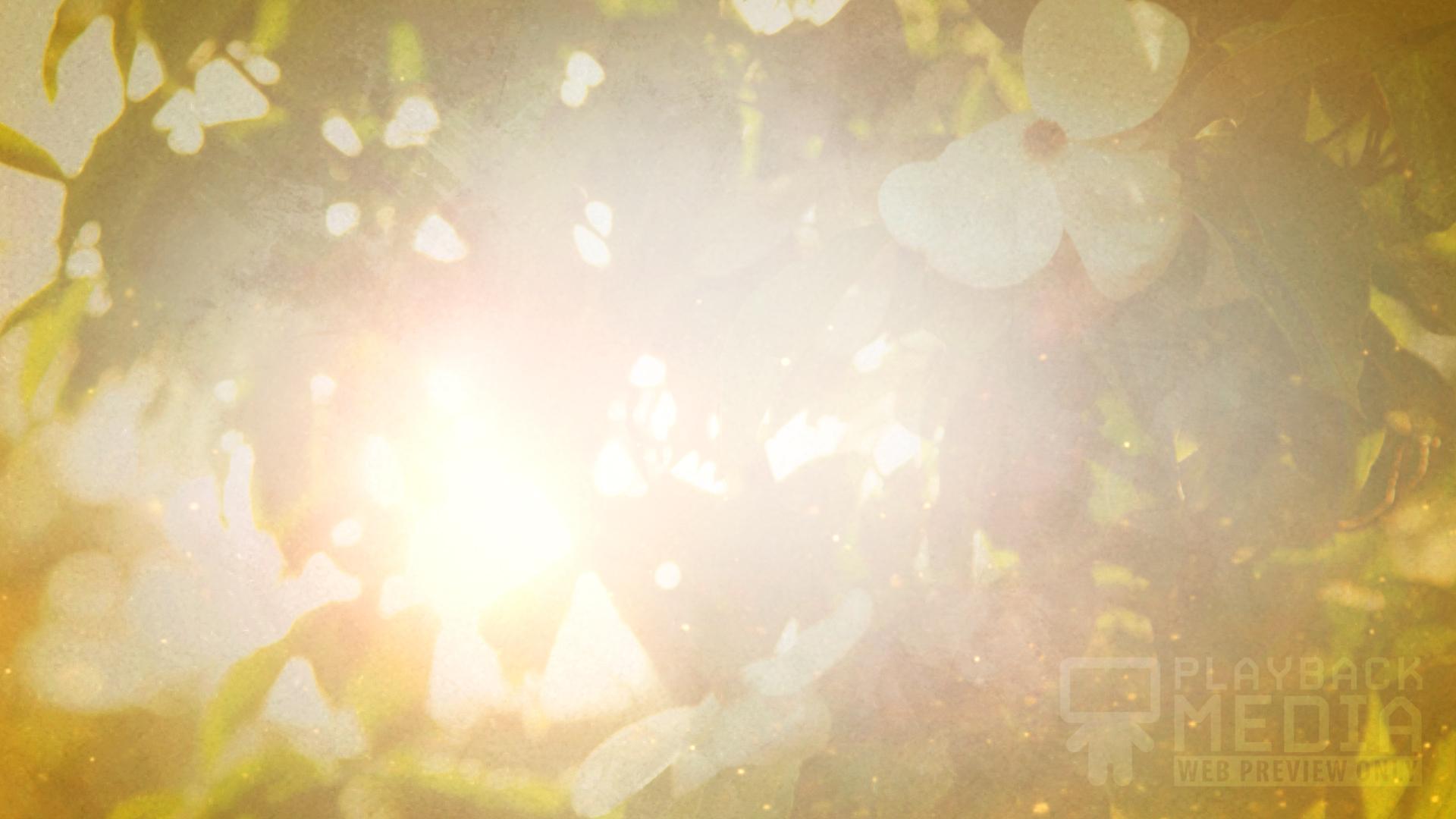 Sunny Days Motion 1 Image