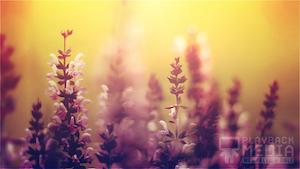 Vibrant Blooms 2 Still