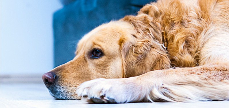 seperation anxiety in dogs 01 what is a separation anxiety separation anxiety is a state of distress and fear experienced by a dog when a person the dog is strongly attached to leaves the house or is just about to leave.