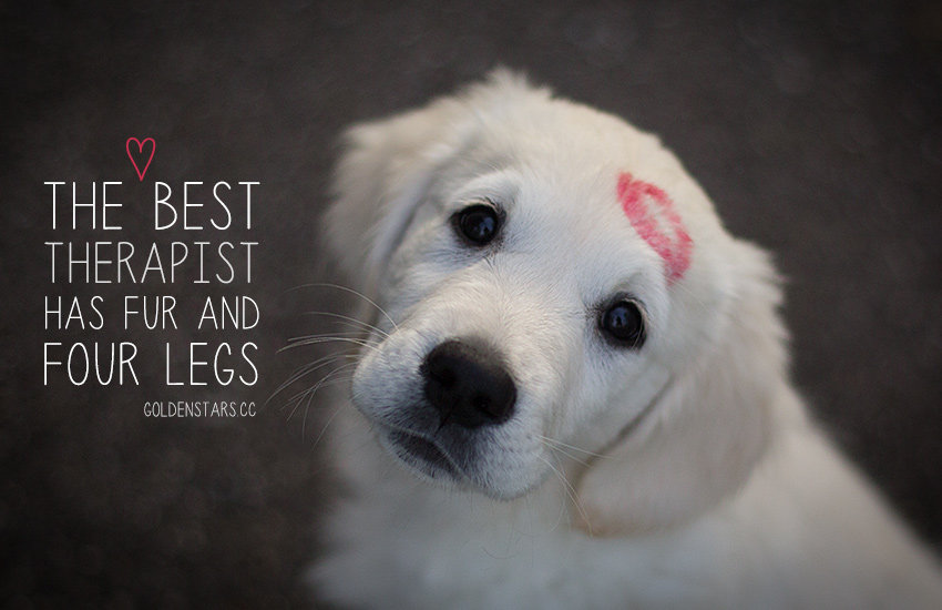 27 Inspirational Dog Quotes About Life And Love