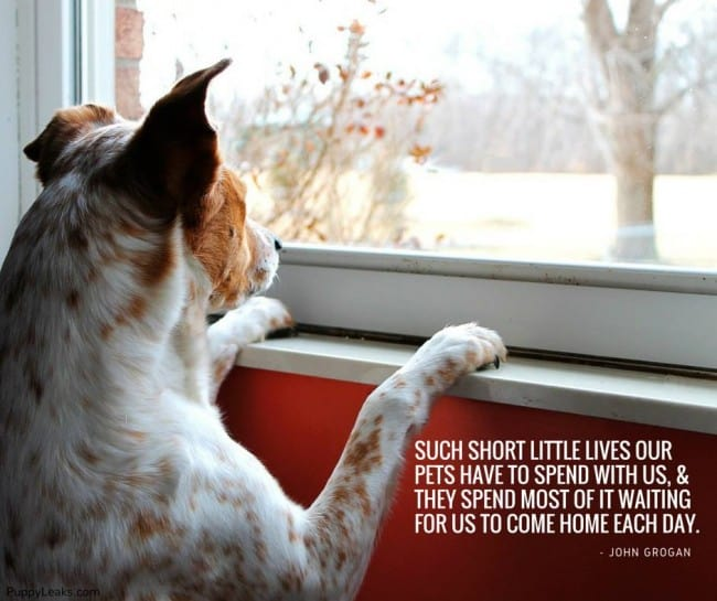 Every Dog Has A Day Quotes