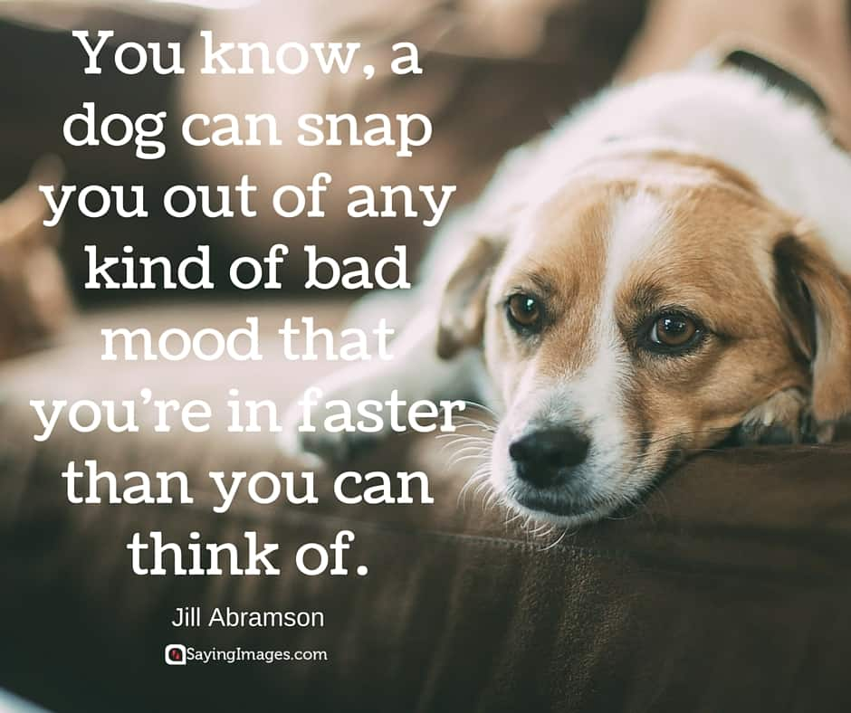 28 Inspirational Dog Quotes about Life and Love | PlayBarkRun