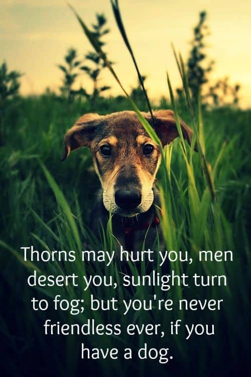Love My Dog Quotes Classy 48 Inspirational Dog Quotes About Life And Love PlayBarkRun